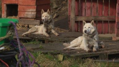 Sled Dog Centre Cairngorms