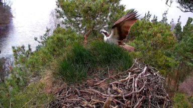 Scottish Wildlife Trust.