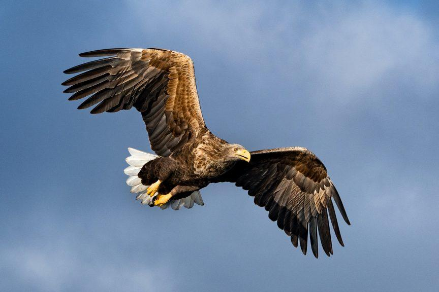Sea Eagle by dorothea-oldani-unsplash