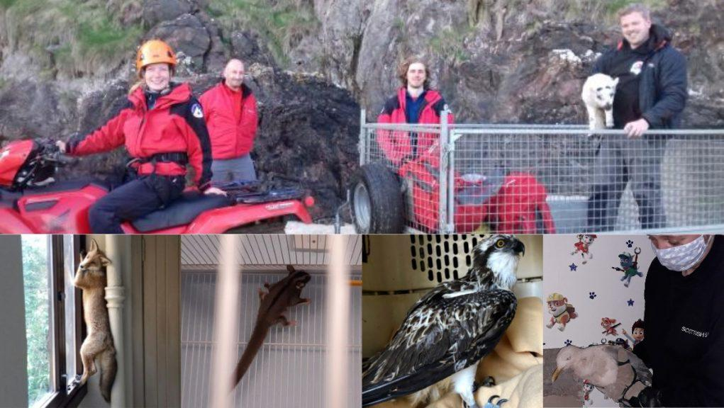 Scottish SPCA: The charity has cared for thousands of animals during lockdown.