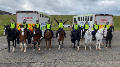 Police Scotland Horses.