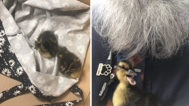 Two ducklings have been found outside Glasgow Central Station.