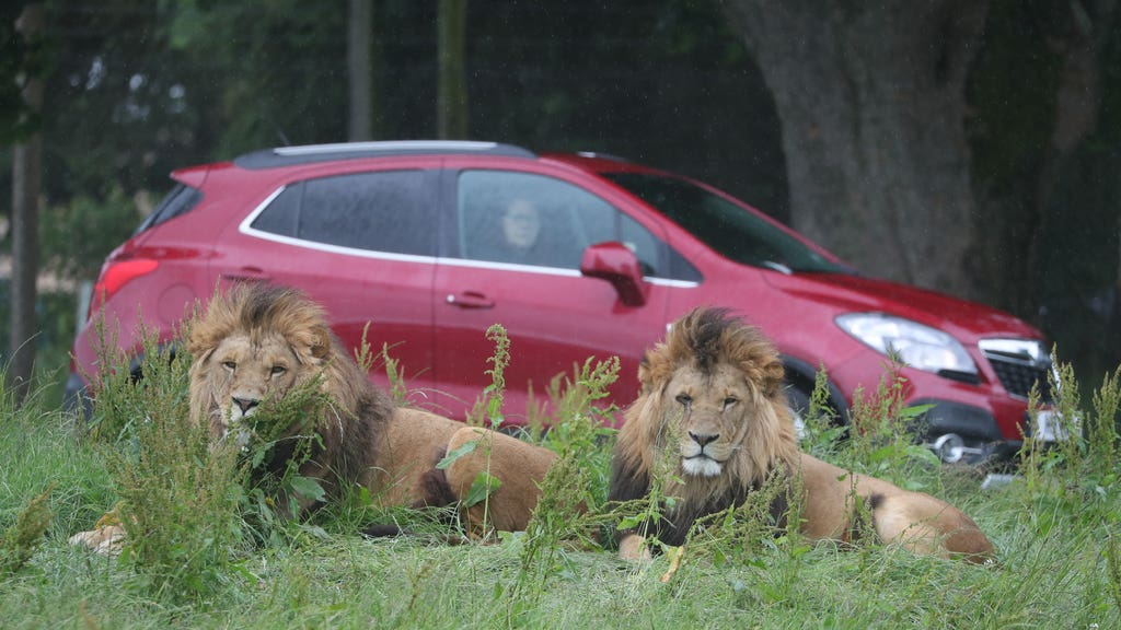 The British and Irish Association of Zoos and Aquariums (Biaza) says it is investigating complaints about the park.